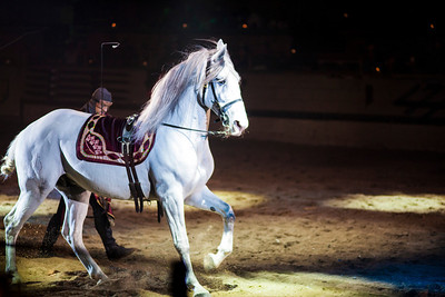 11-09-2012 Medieval Times