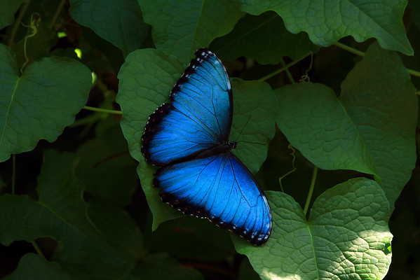 Butterflies, Dragonflies & Insects