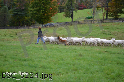 Herding Trials Sept29