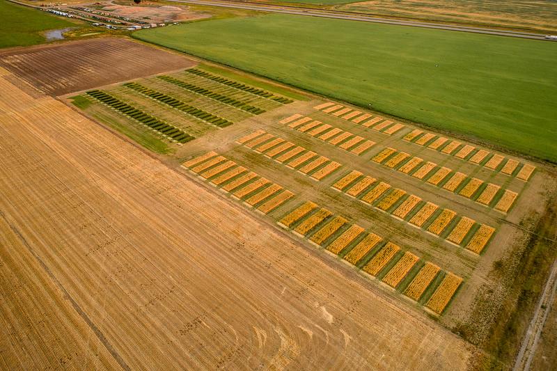 barley 40.jpg