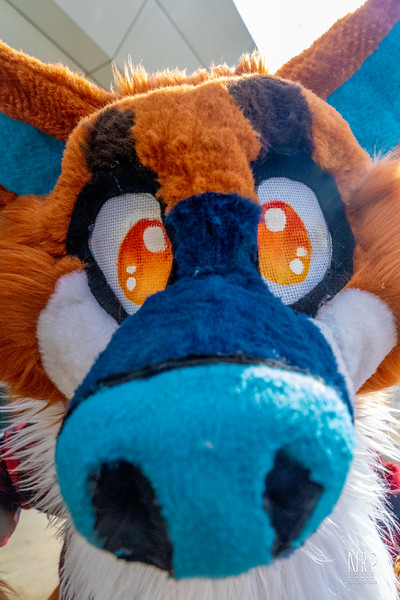 Smallz The furry Friend (29 of 71).jpg