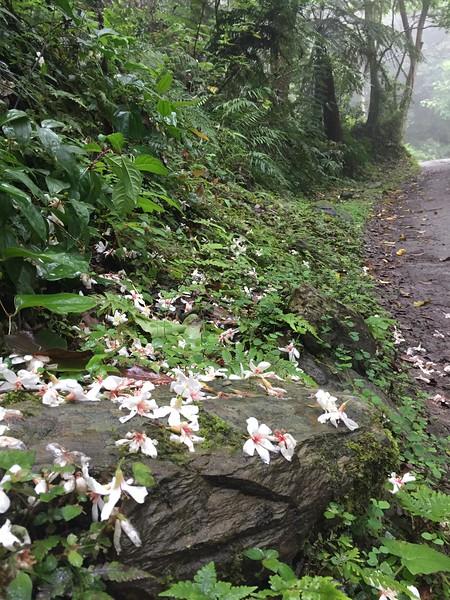 Taiwan East Coast Road Trip