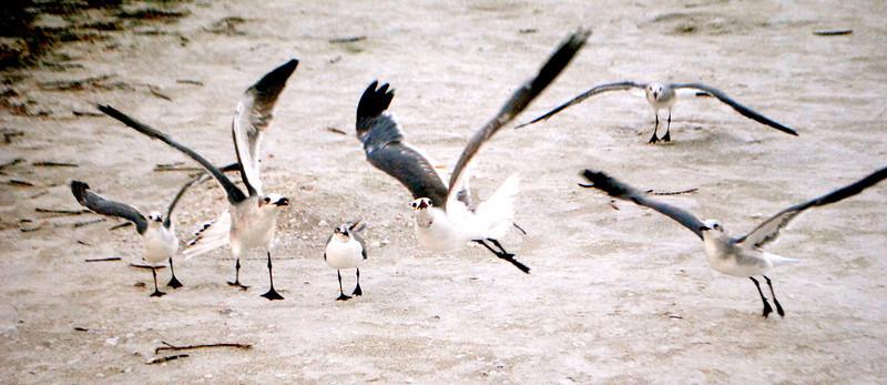 Sea Life, Shells and Birds in Sanibel Island