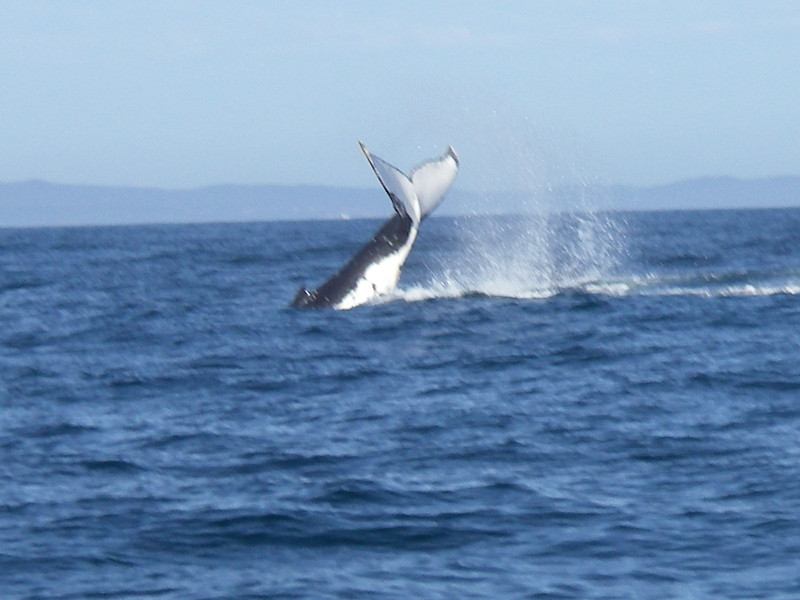 Sydney trip and Mirimbula 067.JPG