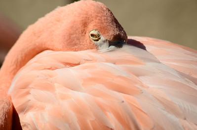 San Diego Zoo - Aug 19, 2011