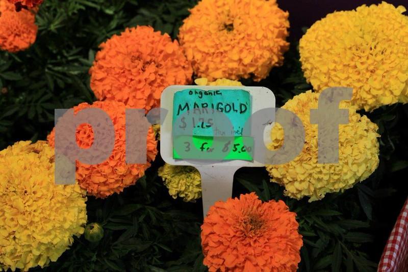 Organic Marigold 8657.jpg