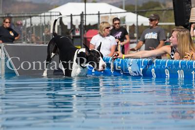 Splash Dogs & Course A Lure