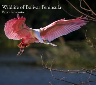 Texas Bolivar Peninsula