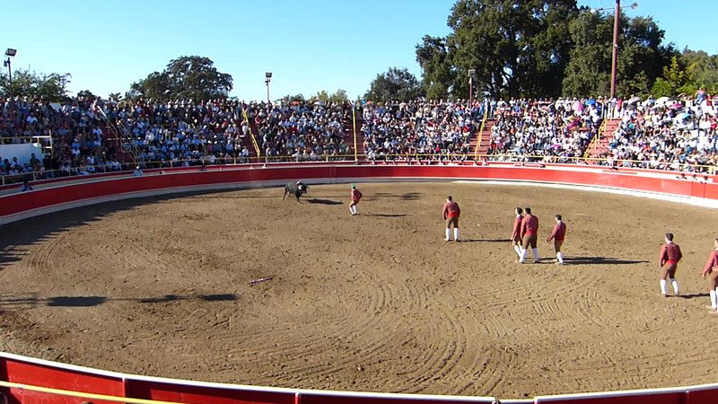 """Exciting video of the first attempt of the Forcados to perform pega de cara (""""face catch"""") with the bull. The goal is for the man in front to secure the animal's head, then be quickly aided by the other Forcados, who surround and subdue the bull with only their bare hands. As you will see, it doesn't always work according to plan."""