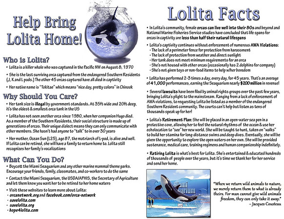 Lolita Flyer