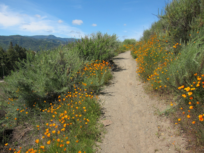 Yet another scenic trail with poppies and the coastal range behind.