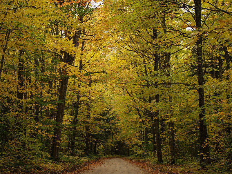 Canopy in the Hiawatha National Forest