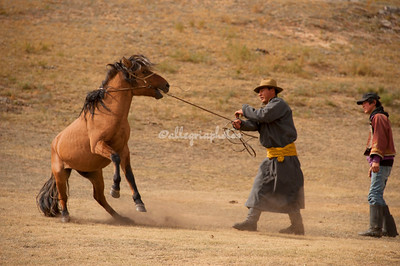 Images of the Mongolian countryside