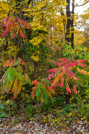 Digital Fall Color Backgrounds Available At Jim's Photos