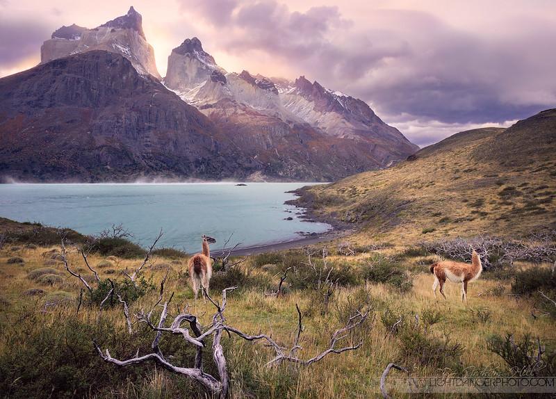 Patagonia - Torres Del Paine 7 darker.jpg