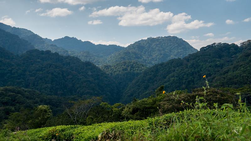 Nyugwe-Rwanda-12.jpg