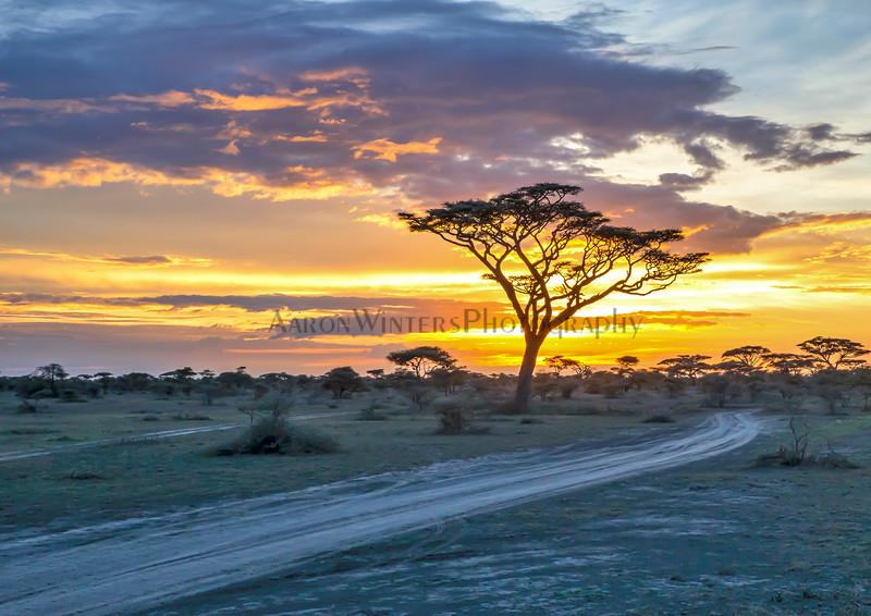 The Road To Ndutu