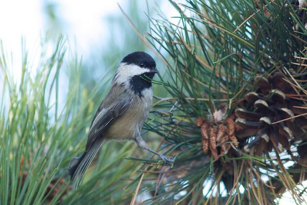 Assorted  Birds