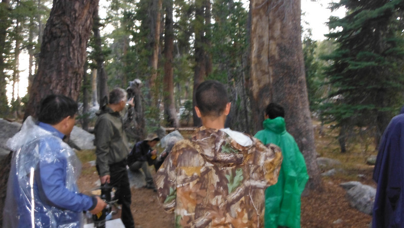sequoia 027.JPG