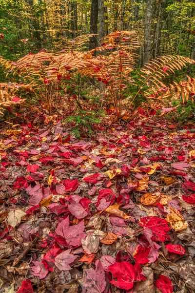 Maine Fall 2019-4.jpg