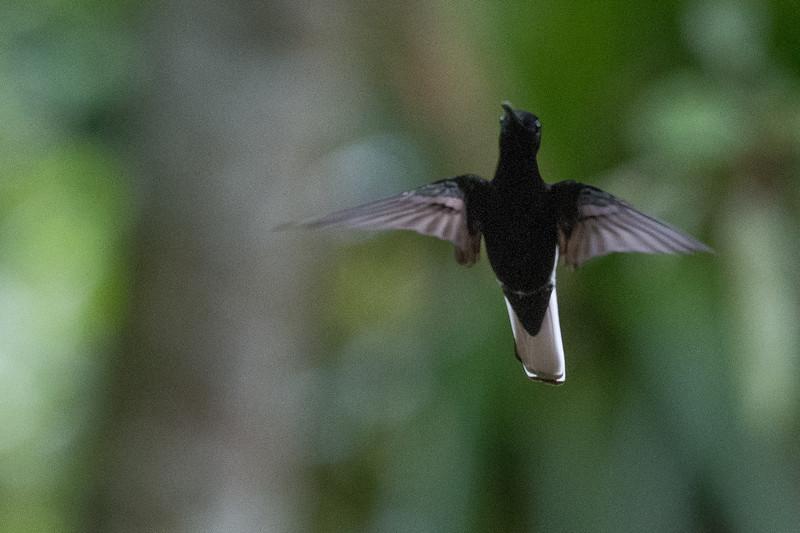 19-Sept Brazil Birds-8910.JPG