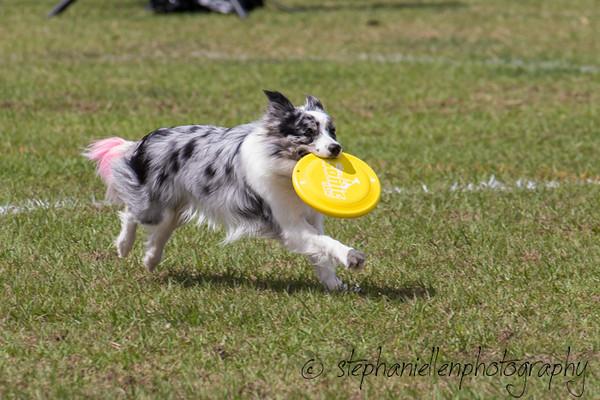 _MG_2977Up_dog_International_2016_StephaniellenPhotography.jpg