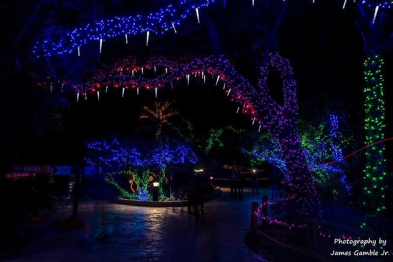 Houston-Zoo-Lights-3143.jpg