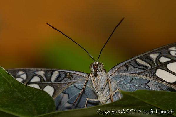 Close-up Butterflies & Skippers