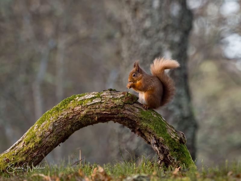 RedSquirrelBootCamp_130217_824.jpg