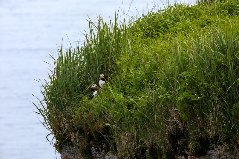 MinganArchipelago_ZachBaranowski_puffin-pair-on-cliff-ile-aux-perroquets.jpg