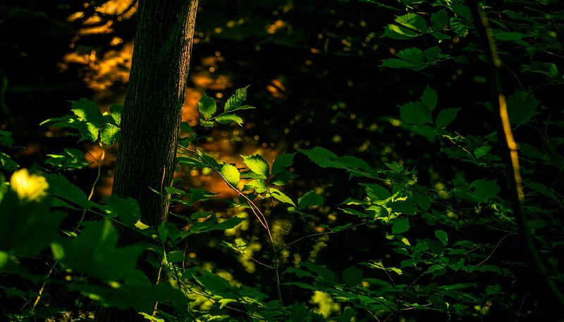 The Magic of Light-428.jpg