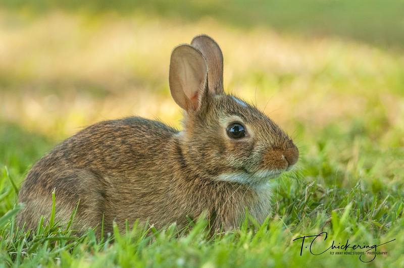 Rabbit Eight-1561322724877.jpg