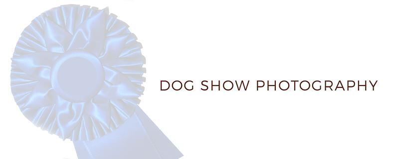 dogshowphotography banner  .png