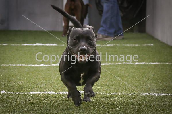 ORDER PRINTS: Puppy Bowl 2/1/15