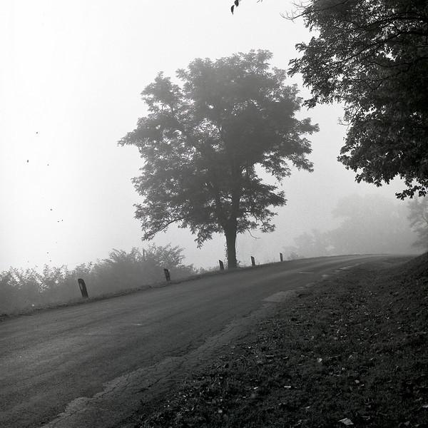 48310548_Tree Fog Road