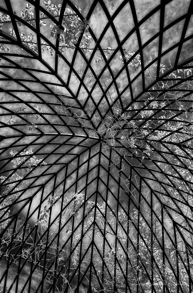 New York Botanical Garden - NYBG  Bronx, NY in Infrard