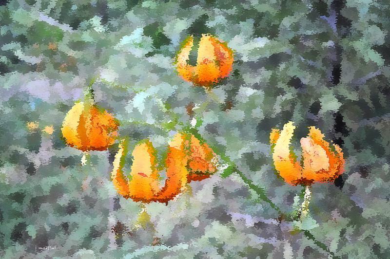 orange dabs 6-18-2013.jpg
