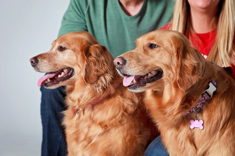 Picture Pawfect - 19 marca 2017 - 119-1.jpg