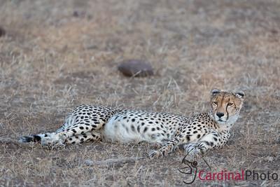 Africa Safari 2018