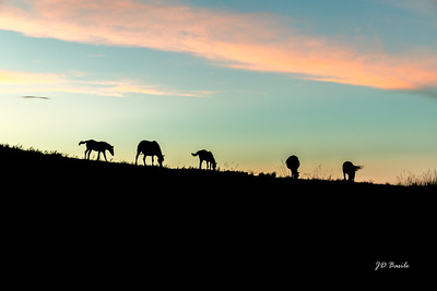 Animals & Wildlife