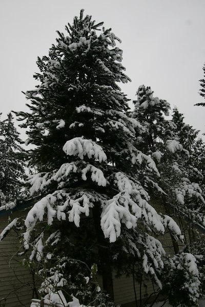 snow day(s) november 2006