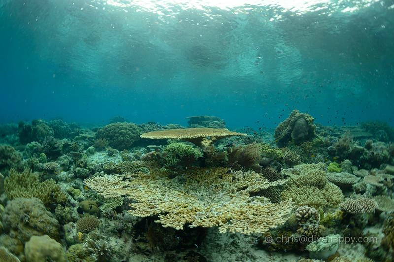 Scuba Diving Raja Ampat, Indonesia