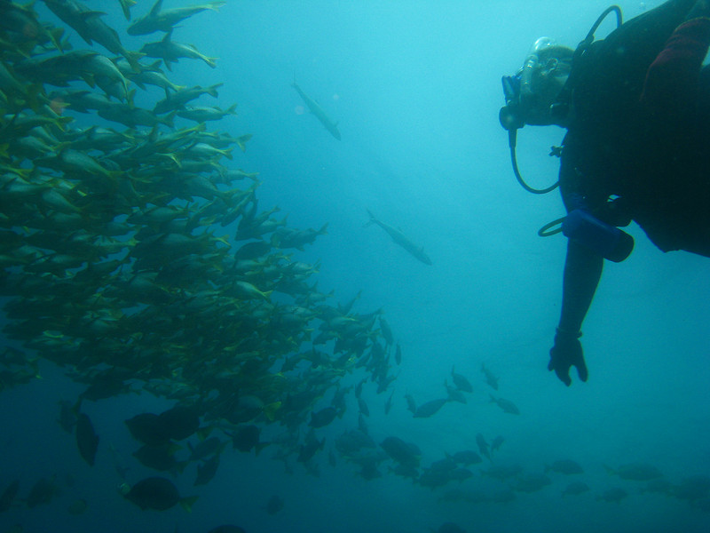 Diving in the Galapagos (103 of 392)