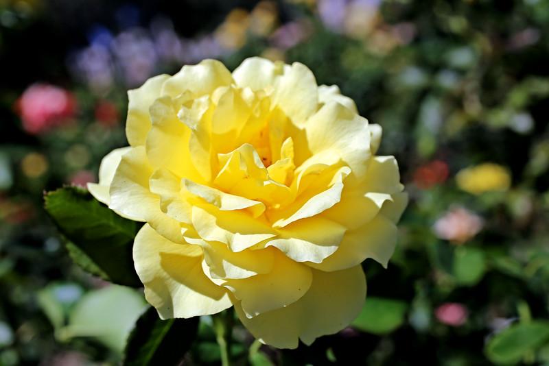 Vibrant foilage yellow.jpg