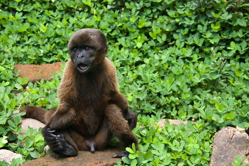 damaged-monkey_4888461681_o.jpg