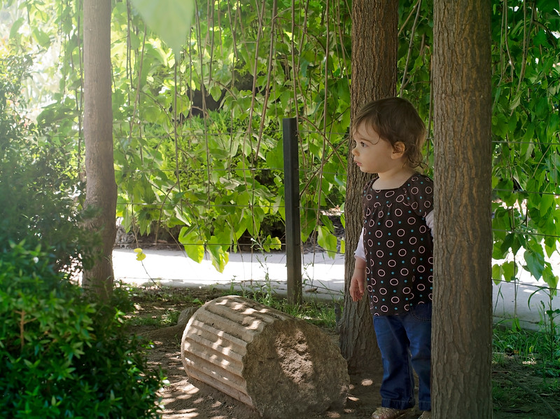elora trees.jpg