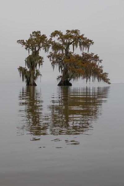 Cypress_Swamps_1117_PSokol-2927-Edit.jpg