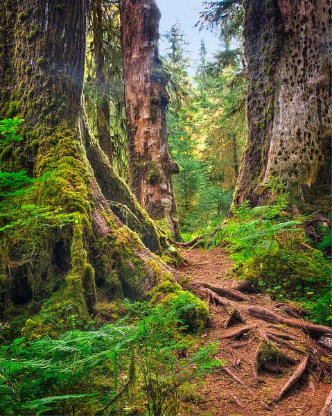136.Sharp Todd.2.Old Forest Path.JPG