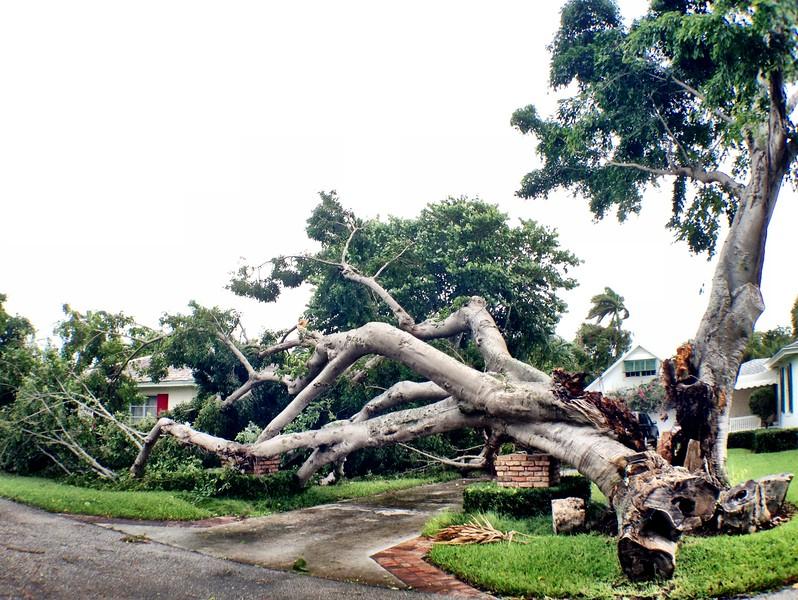 Hurricanes + storms
