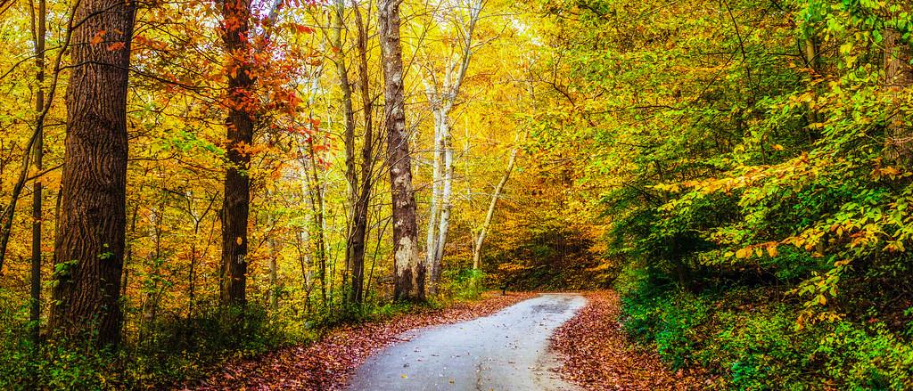 宾州雷德利克里克公园(Ridley creek park),秋景落叶